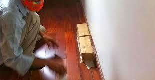 Cách diệt mối tận gốc cho sàn gỗ