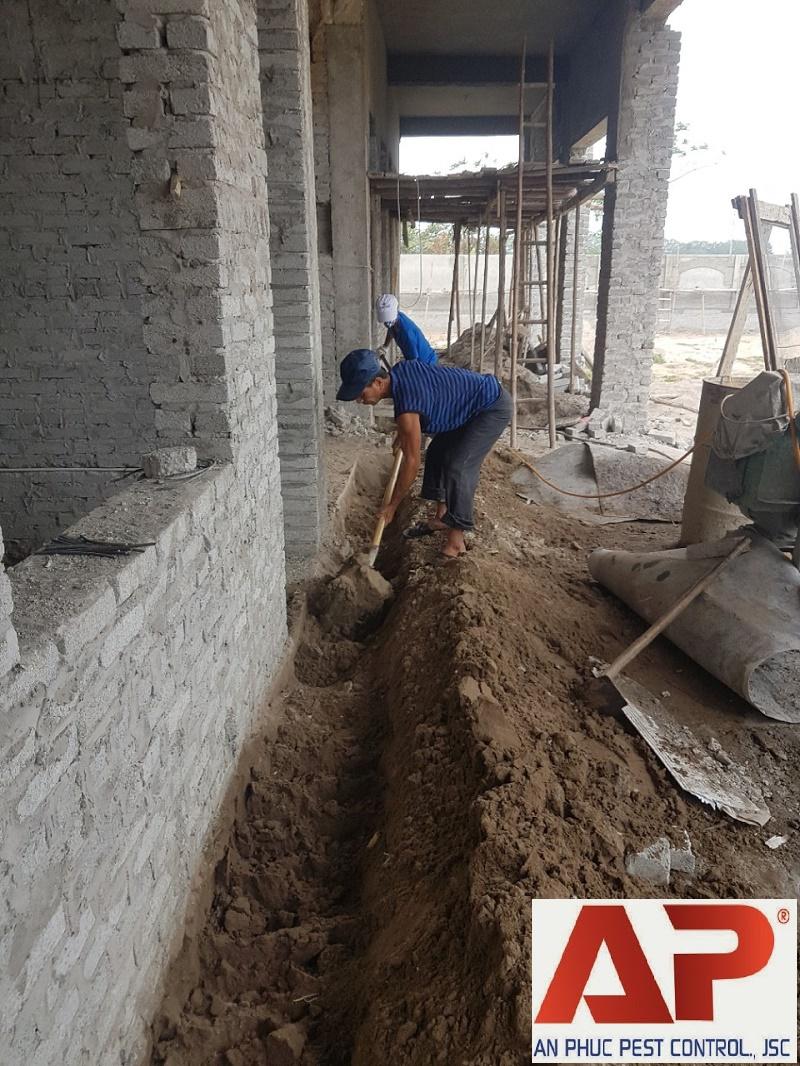 Phòng mối khi xây nhà