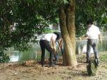 Phòng chống mối cây trồng