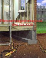 Phòng chống mối mọt công trình nhà ở