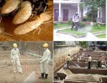 Sao lại phải phòng chống môi xây dựng ?