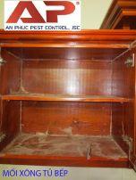 Diệt mối trong tủ gỗ đơn giản